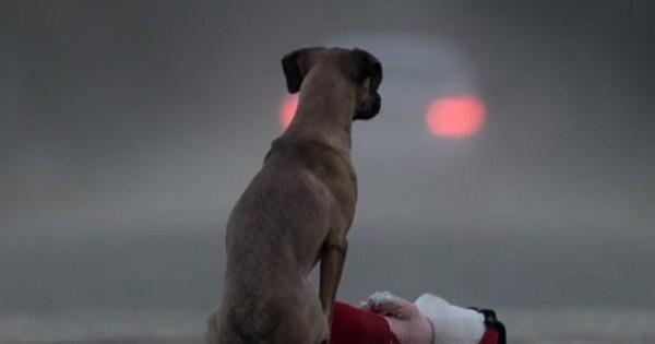 Ένα βίντεο που ΠΡΕΠΕΙ να δουν όλοι οι ιδιοκτήτες σκύλων (Βίντεο)