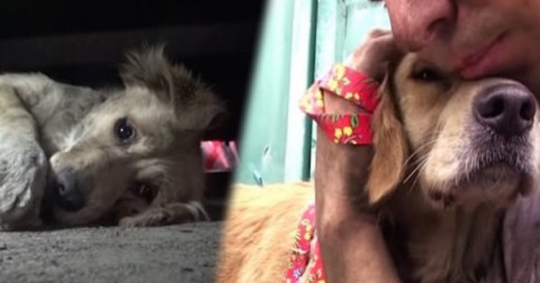 Σώζουν ένα εγκαταλελειμμένο λαμπραντόρ και η αντίδρασή του θα σας κάνει να δακρύσετε! (Βίντεο)