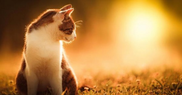 Προστάτεψε τη γάτα σου από τη ζέστη και τον ήλιο