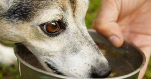 Νόμος 4235/2014: Επιτρέπεται να ποτίζουμε και να ταΐζουμε τα αδέσποτα ζώα!