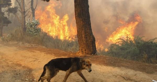 Πανελλήνια έκκληση για τα ζώα – θύματα των πυρκαγιών
