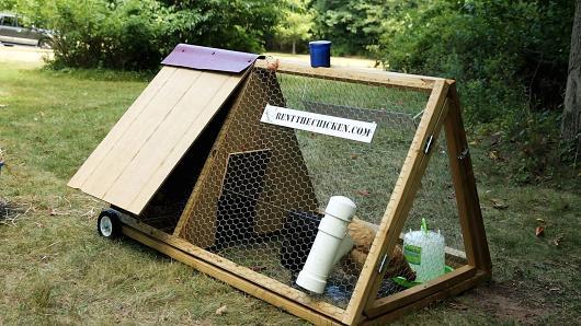 φωτογραφίες γρίπη των πουλερικών Βίντεο
