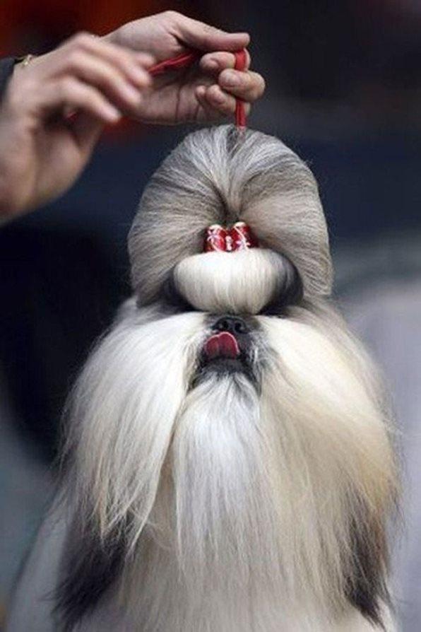 Σκύλος κουρέματα σκύλων κουρέμα σκύλου