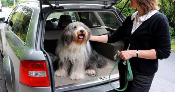 Ταξίδι με το σκύλο στο αυτοκίνητο; Προετοιμαστείτε σωστά