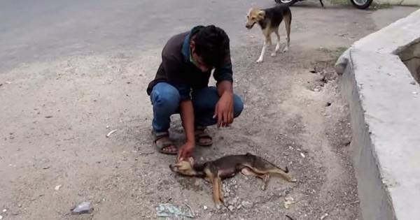 Όταν βρήκε αυτό το κουτάβι, δεν μπορούσε καν να αναπνεύσει. Μετά από 2 εβδομάδες όμως… (Βίντεο)