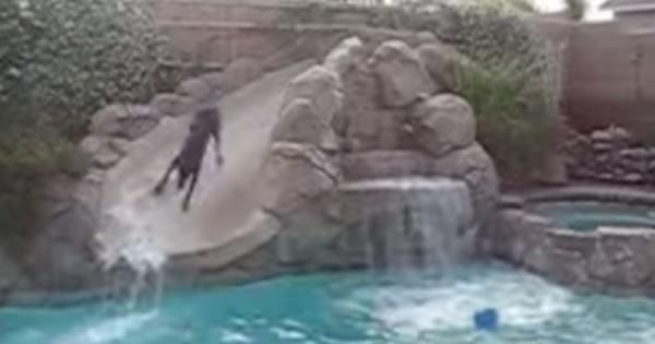 Δείτε τι κάνει ένα Ντόμπερμαν όταν είναι μόνο στο σπίτι (Βίντεο)