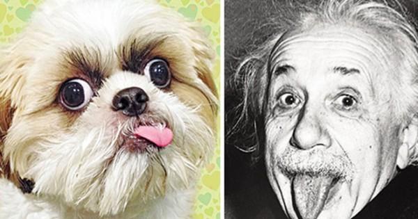 Κούπερ… ο σκύλος Αϊνστάιν, που έχει ικανότητες μωρού 18 μηνών!