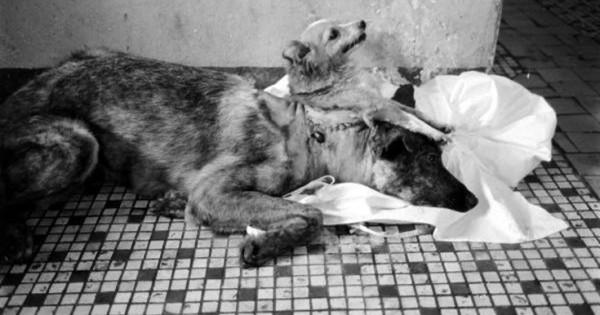 Σκυλιά που μοιάζουν να έχουν ξεπηδήσει από σελίδες επιστημονικής φαντασίας (Eικόνες)