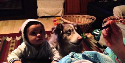 Ο σκύλος μίλησε νωρίτερα από το μωρό (Βίντεο)