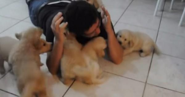 Έτσι δείχνουν τα κουτάβια την αγάπη τους (Βίντεο)