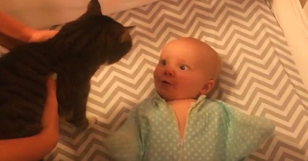 μωρό Γάτα Βίντεο