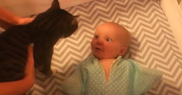 Η μαμά βάζει τη γάτα μέσα στην κούνια – Δείτε την αντίδραση του μωρού! (Βίντεο)