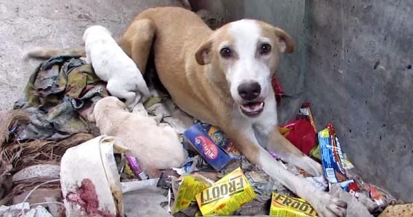 Την βρήκαν να κλαίει σε έναν σωρό από σκουπίδια, αλλά αν κοιτάξετε καλύτερα θα δείτε ότι δεν είναι μόνη της…