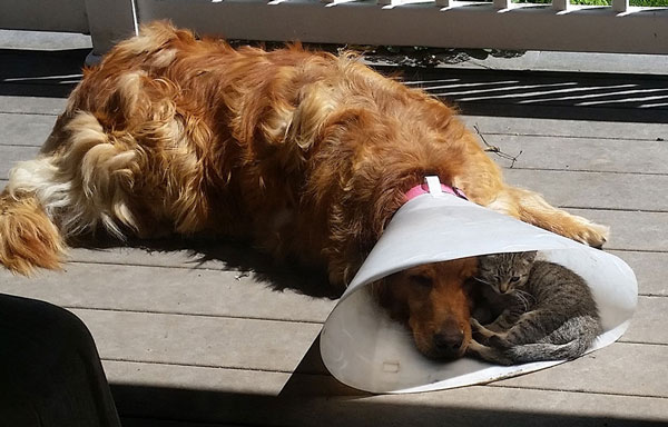 Είναι τέλειο να έχεις έναν φίλο όταν τον χρειάζεσαι!