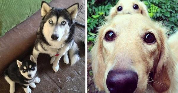 33 μοναδικές φωτογραφίες με σκύλους και τα παιδιά τους