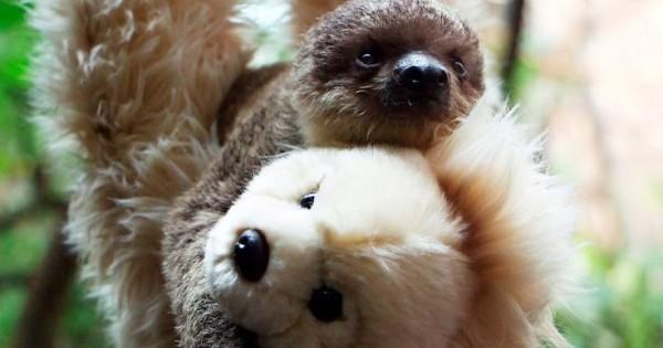 Αντικατέστησαν τη μαμά του με λούτρινο αρκουδάκι (Φωτογραφίες)