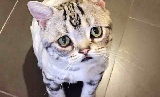 Η πιο λυπημένη γάτα στο internet; (Φωτογραφίες)