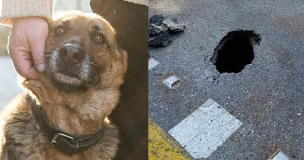 Σκύλος Κέρκυρα απόδραση