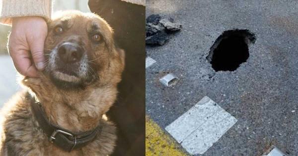 Ένας σκύλος ματαίωσε απόδραση ισοβιτών στην Κέρκυρα!