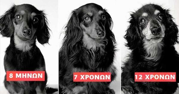 «Η ζωή ενός σκύλου»: Υπέροχες φωτογραφίες σκύλων από την μικρή τους ηλικία μέχρι τα γεράματα τους (Εικόνες)
