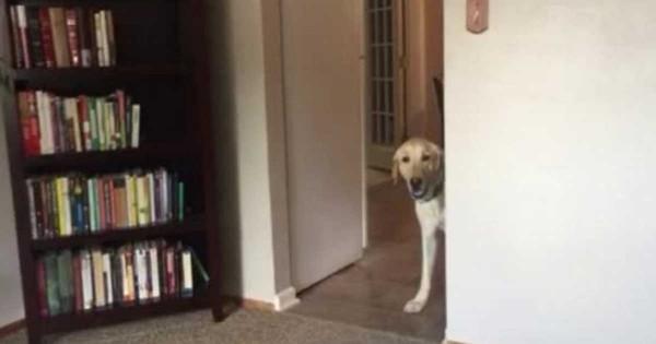 Ο φόβος που έχει αυτός ο σκύλος είναι η χαρά κάθε νοικοκυράς!
