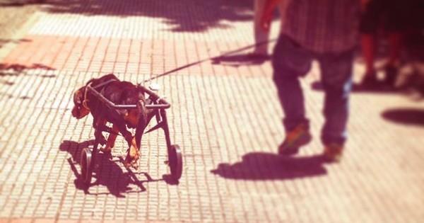 Μια υπέροχη ιστορία: Ο ανάπηρος Λουκάς κάνει πλέον… βόλτες στο όνειρο!