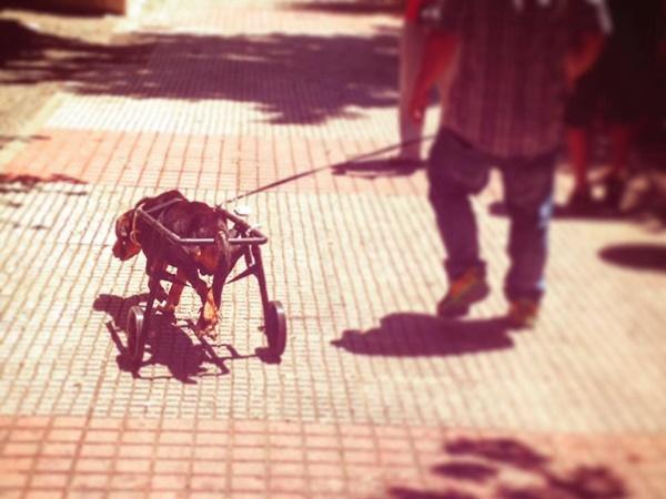 Σκύλος ανάπηρος