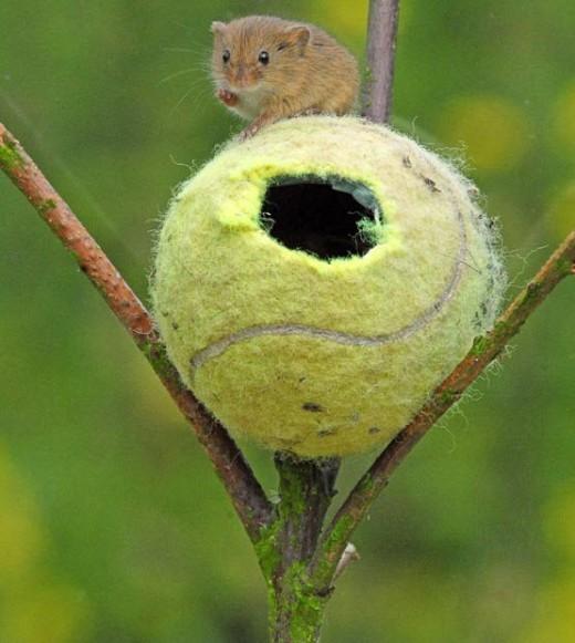μπαλάκια του τένις ζώα