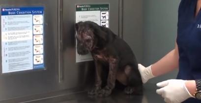 Βίντεο: Η διάσωση και θεραπεία ενός αδέσποτου κουταβιού