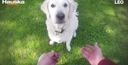 Μαγικά στους σκύλους (Βίντεο)
