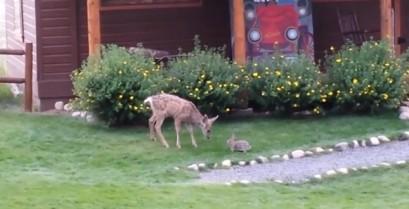 Ένα μικρό ελάφι και ένας λαγός παίζουν μαζί (Βίντεο)