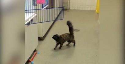Γάτα με πρόβλημα πρόσφυσης (Βίντεο)