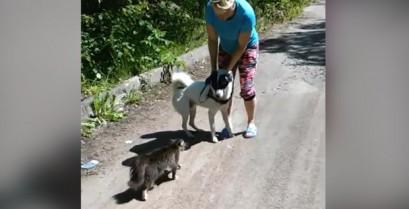 Γάτα νταής επιτίθεται σε σκύλο (Βίντεο)