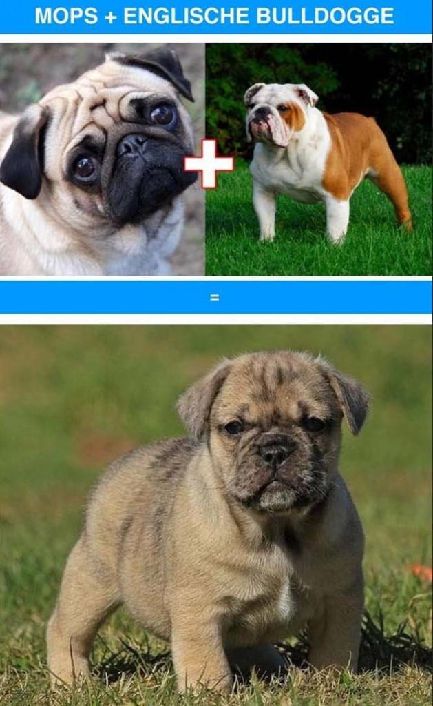διασταυρώσεις σκύλων