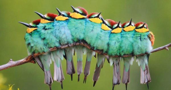 """14 φωτογραφίες από πουλιά που """"αγκαλιάζονται"""" προκειμένου να ζεσταθούν"""