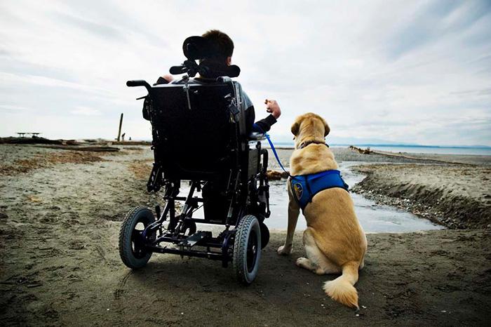 σκύλοι Βίντεο