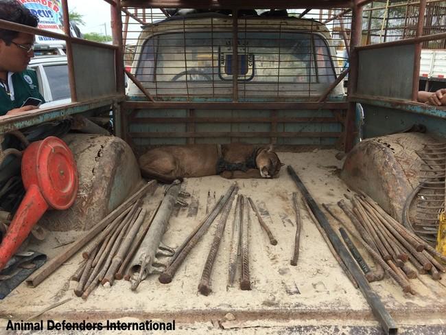 απελευθέρωση ζώων