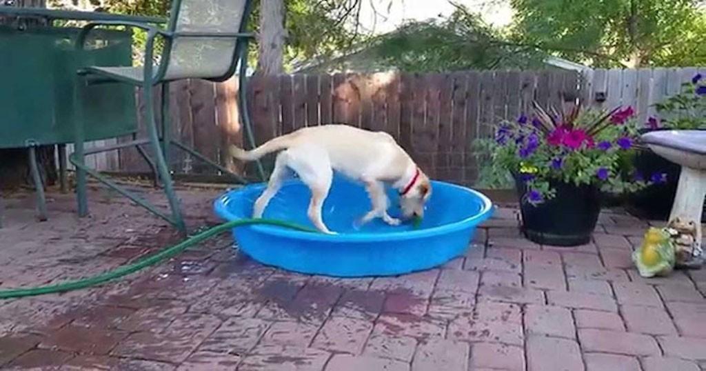 Έξυπνο σκυλί γεμίζει παιδική πισίνα για τον εαυτό του! (Βίντε)