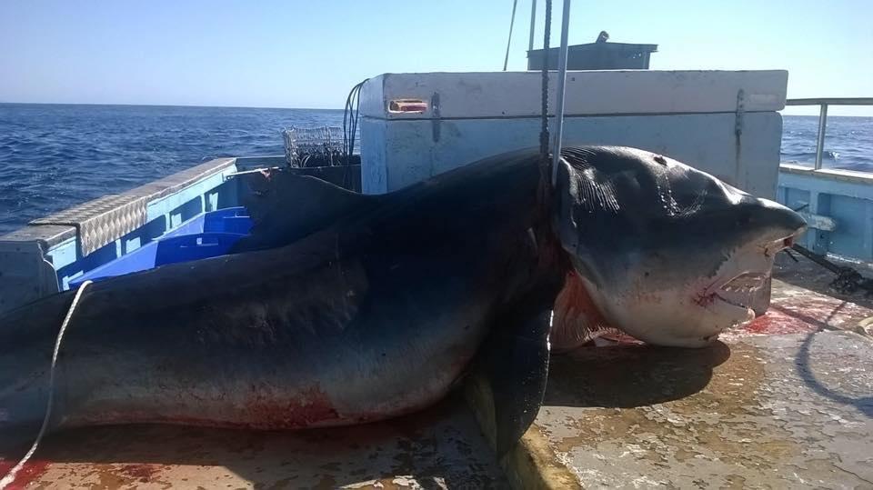 καρχαρίας Αυστραλία
