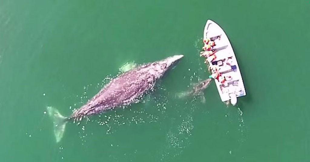 φάλαινα Βίντεο