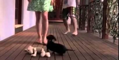Το μικροσκοπικό κουτάβι φύλακας (Βίντεο)