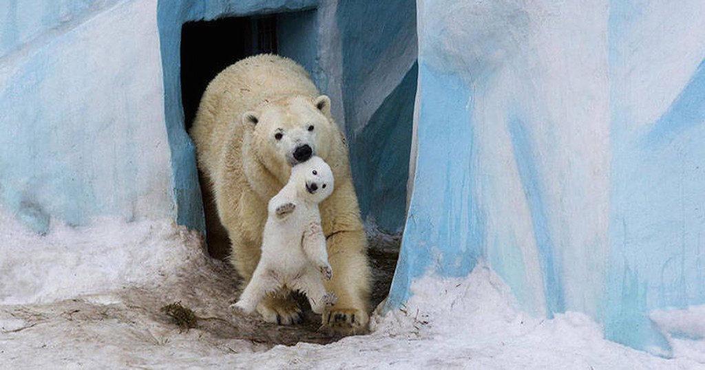 15 ζώα που δεν αντέχουν άλλο τα καπρίτσια των παιδιών τους! (Εικόνες)