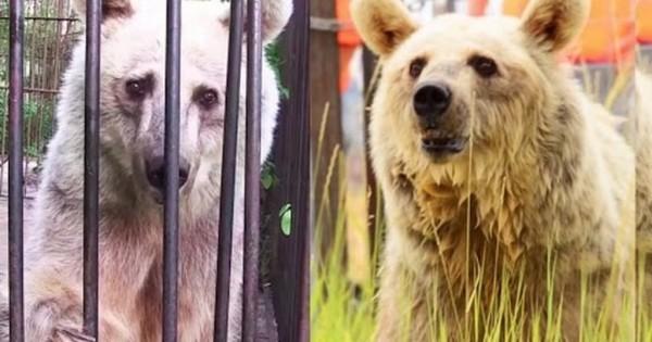 Μετά από 20 χρόνια δυστυχίας, αυτές οι αρκούδες βιώνουν την ευτυχία της ελευθερίας