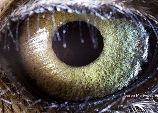 Μάτια ζώων