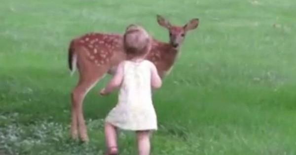 Η επιμονή της ανταμείφθηκε: Τελικά το χάιδεψε το ελαφάκι η μικρή… ΔΕΙΤΕ το βίντεο με τις εκατομμύρια προβολές! (Βίντεο)
