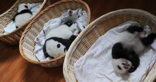 Γλυκές εικόνες: Έλιωσε το Ιντερνετ -10 μικρά πάντα σε καλάθια, κάνουν σαν… μωρά