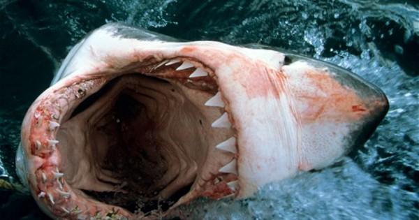 Άβολες αλήθειες πίσω από το δάγκωμα του καρχαρία (Εικόνες)