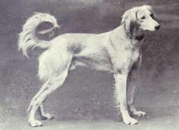 φωτογραφίες σκυλιά