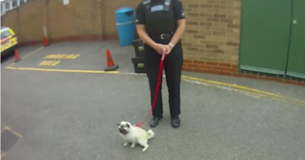Η αντίδραση ενός κλεμμένου σκύλου όταν επιστρέφεται στην ιδιοκτήτρια του (video)