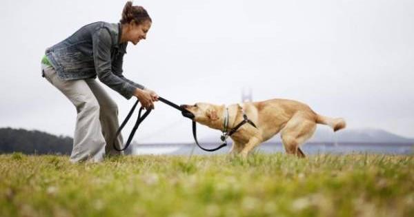 6 λόγοι που η ζωή είναι καλύτερη με έναν σκύλο (Εικόνες)